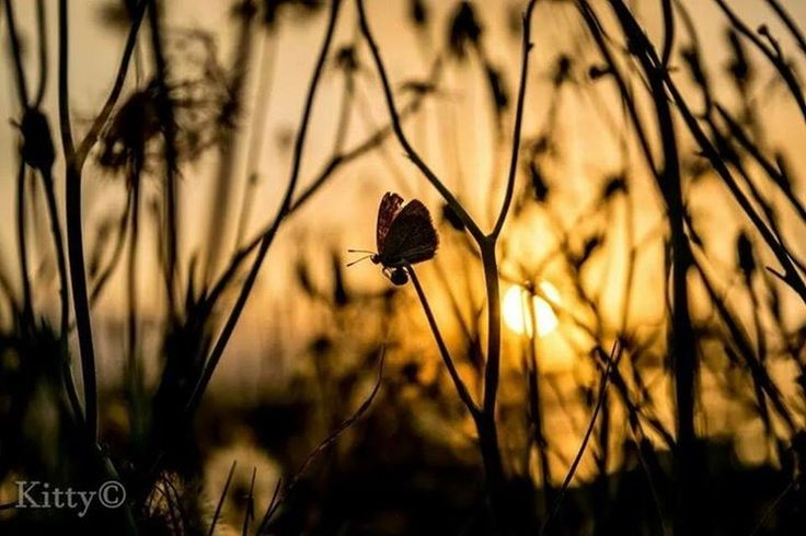 sunset over a butterfly