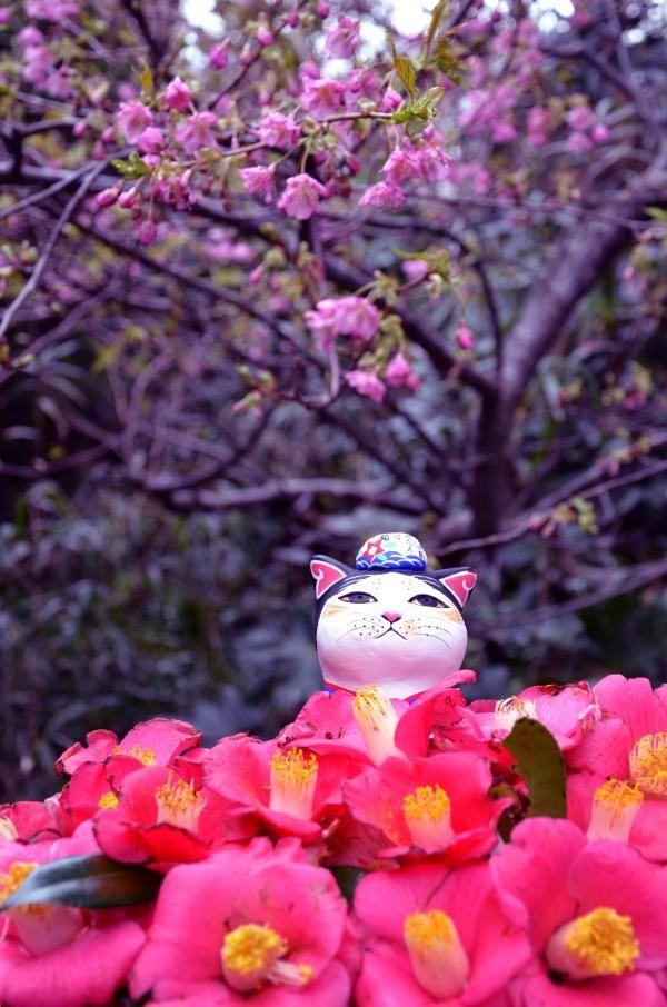 伊豆大島の風景。椿が咲く季節には椿まつりが開催されている。伊豆大島の観光スポット