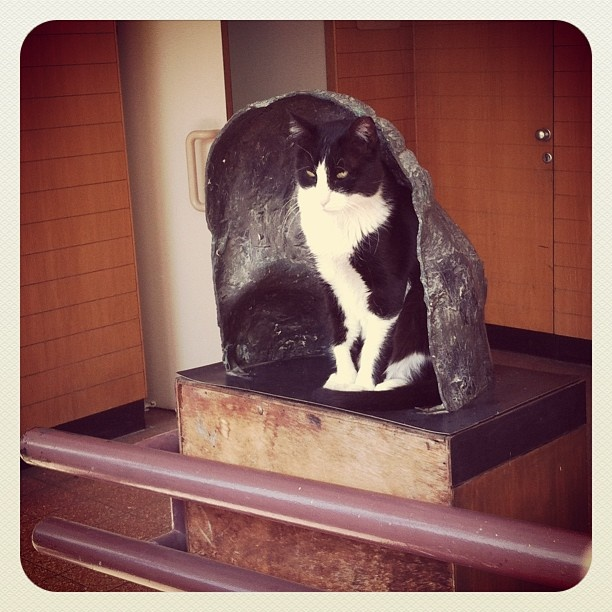 A black and white cat attempting to pass itself off as one of the statues in the corridor of the Humanities building at Tel Aviv University. Instagram photo by @pihushit (pihushit)