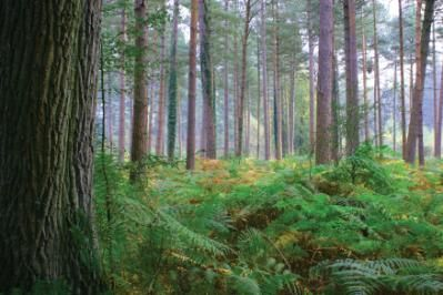 Forest Management for the Farm- Proper woodlot management can generate fodder and income in addition to firewood.