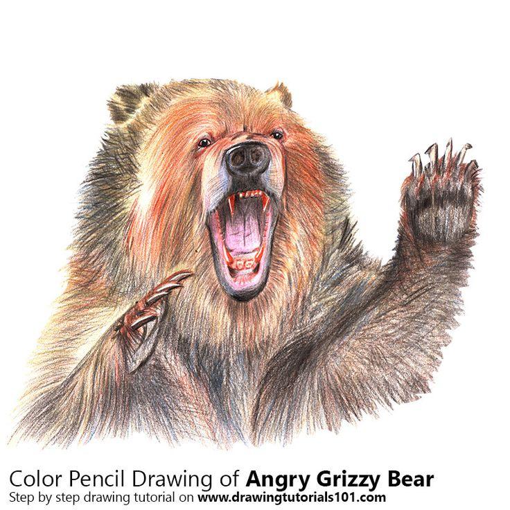 Best 25+ Grizzly bear drawing ideas on Pinterest | Bear ...  Best 25+ Grizzl...