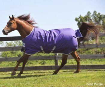 Horseware Amigo Mio 600D Turnout Sheet 78In Purple by Horseware. $49.49. Horseware(R) Amigo Mio(R) Turnouts provide a value price with all the quality and performance that Horseware(R) brands are well known for. Exclusive new Mezzo design adds a touch of western design that can be coordinated with a solid for a complete look. Features Original Rambo(R) fit with patented Front Leg Arches and Straight T-Lock Closure system. Features: . 600 Denier Rip Stop Nylon Outer Shell - Medi...