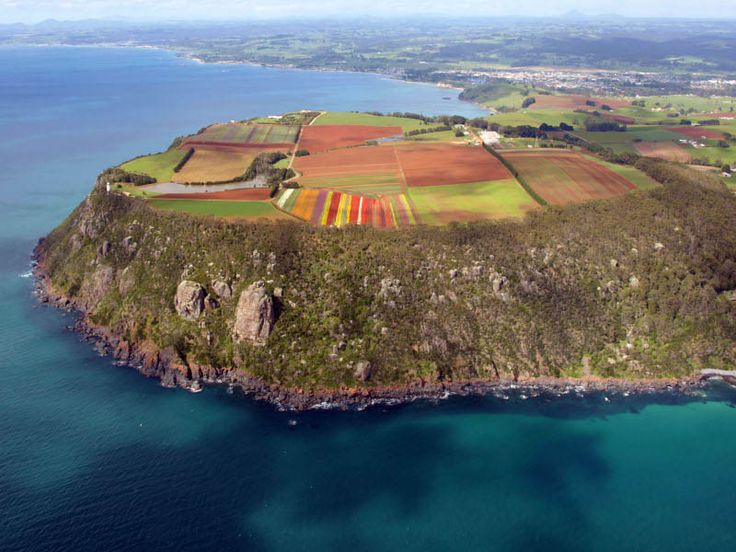 Aerial view from a helicopter of the tulip field at the Table Cape Tulip Farm on Table Cape, near Wynyard, on the North West Coast of Tasmania. It was Blooming Tulips Festival Day at Wynyard