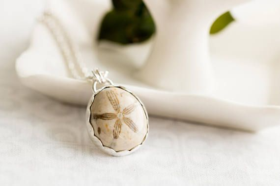 Fossilized Sand Dollar Necklace Real Sand Dollar Jewelry Sea