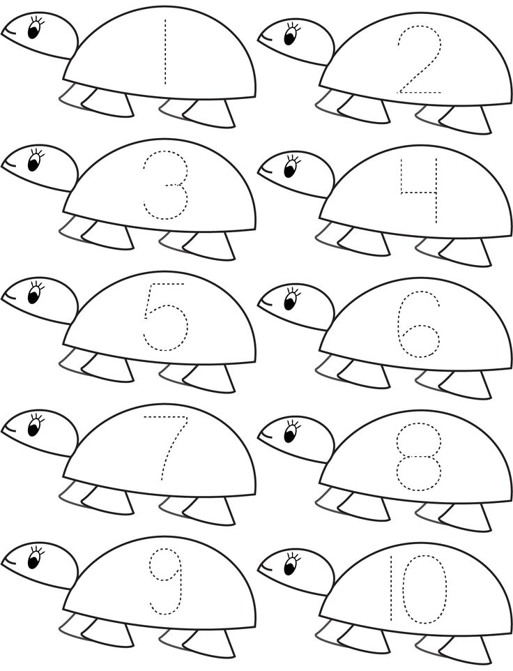 Count Turtle Math Math Coloring