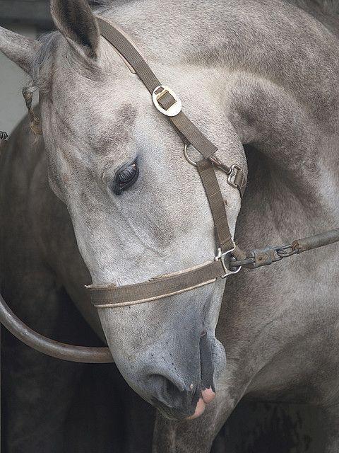 Gorgeous Horse pic