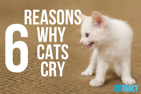Have a chatty cat? Hear what those meows might mean.