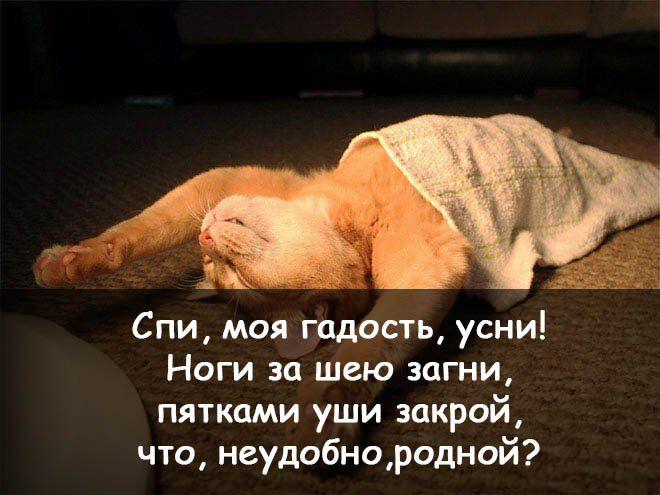 Прикольная и смешная картинка спокойной ночи