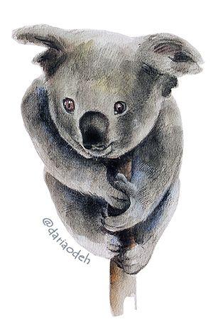 Koala bear illustration
