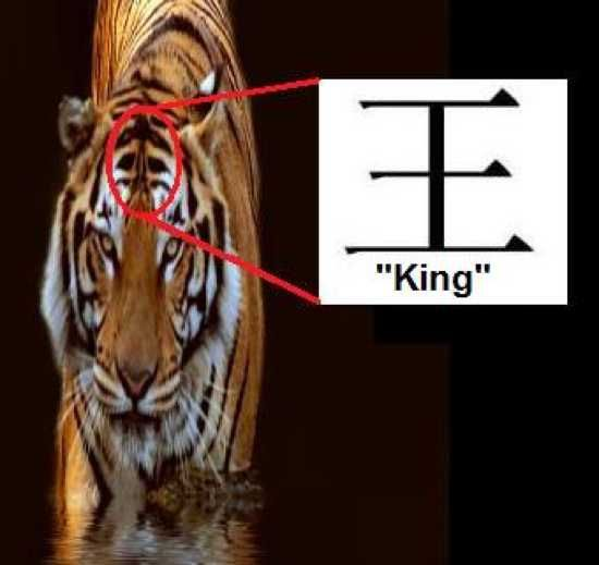 http://listverse.com/2012/09/10/50-unusual-facts-about-tigers/