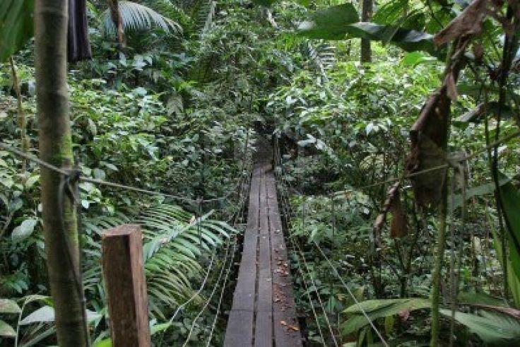 Suspension bridge in Costa Rica jungle