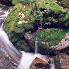 smoko creek