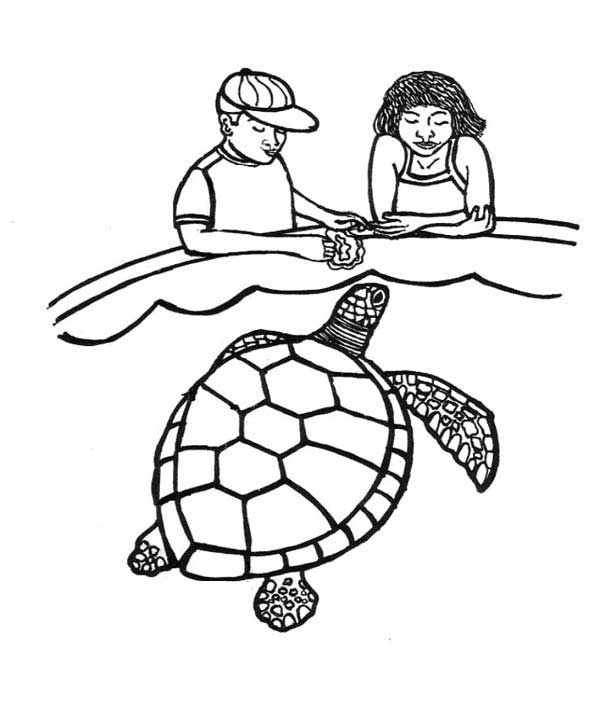 Sea Turtle Feeding Sea Turtle Coloring Page Turtle Coloring Pages Coloring Pages People Coloring Pages