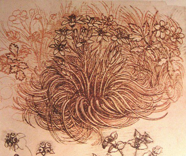 RT @ArtistDaVinci: Drawing of a botanical study https://t.co/nTznGcDgIz #highrenaissance #arthistory https://t.co/x6N7IAleeU