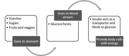 Insulin Resistance - Jozidiet - Blog