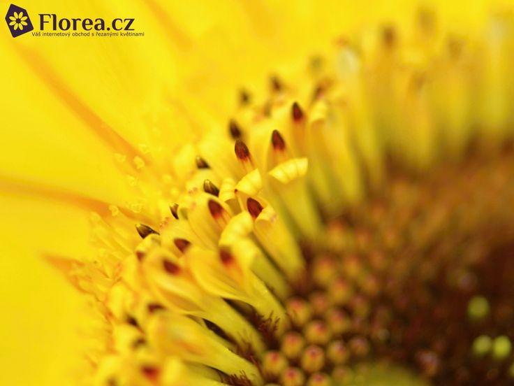 Gerbera Heatwave http://www.florea.cz/produkty/gerbera-1 #gerbera #flowers