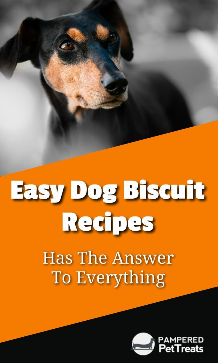 Easy Dog Biscuit Recipes Has The Answer To Everything However