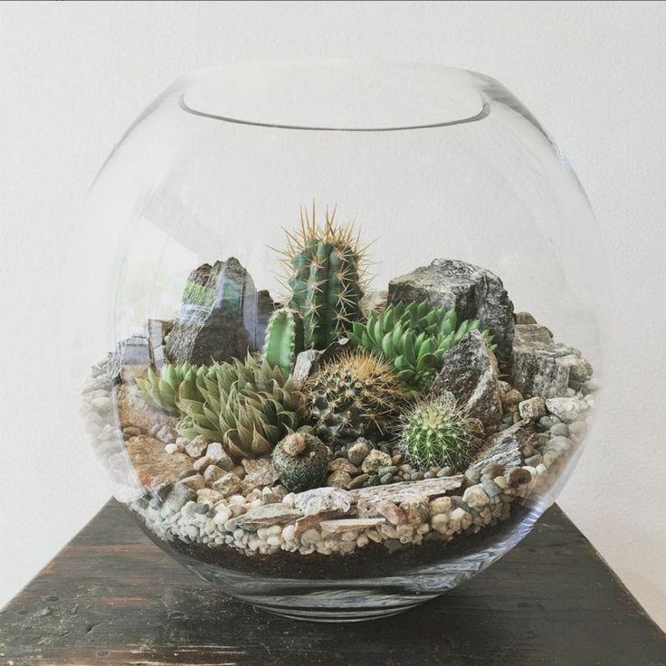 17 mejores ideas sobre terrario cactus en pinterest for Cactus cuidados exterior
