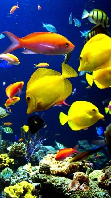 1181 best images about nature underwater on pinterest for Colorful freshwater aquarium fish