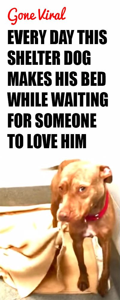 Please repin to help him find a home! http://iheartdogs.com/each-day-this-shelter-dog-makes-his-bed-while-waiting-for-someone-to-love-him/