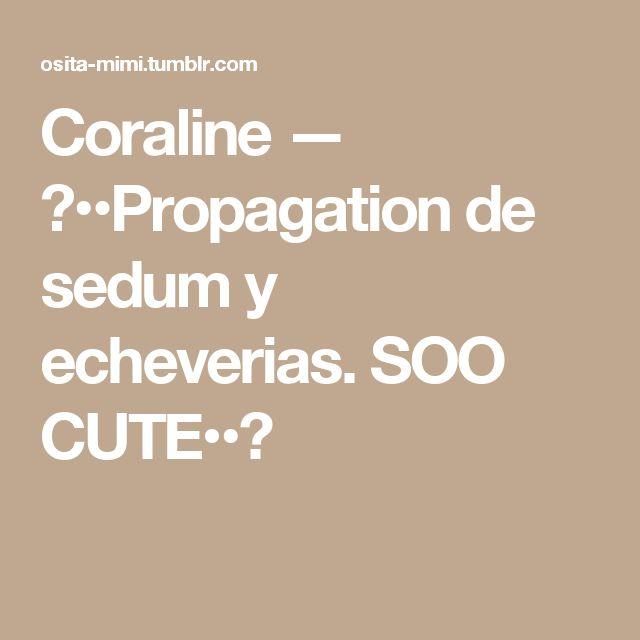 Coraline — ♥••Propagation de sedum y echeverias. SOO CUTE••♥