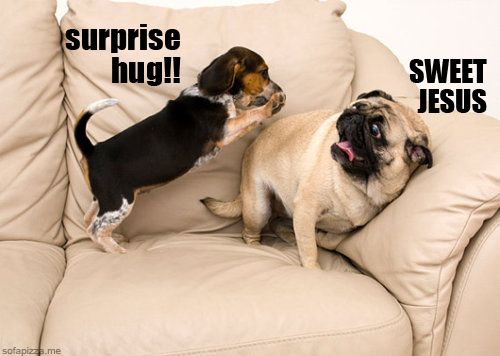 haha: Animal Pics, Puppies, Funny Dogs, Funny Pictures, Surpris Hug, Pugs, Funny Animal, So Funny, Sweets Jesus