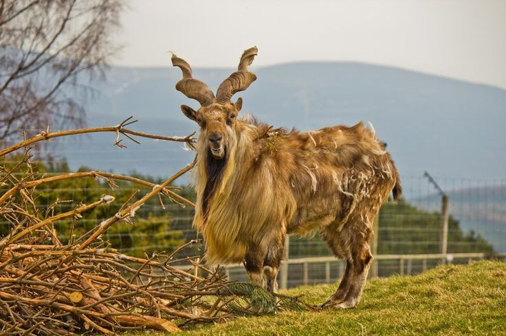 Ten Unusual National Animals That Rival the Unicorn