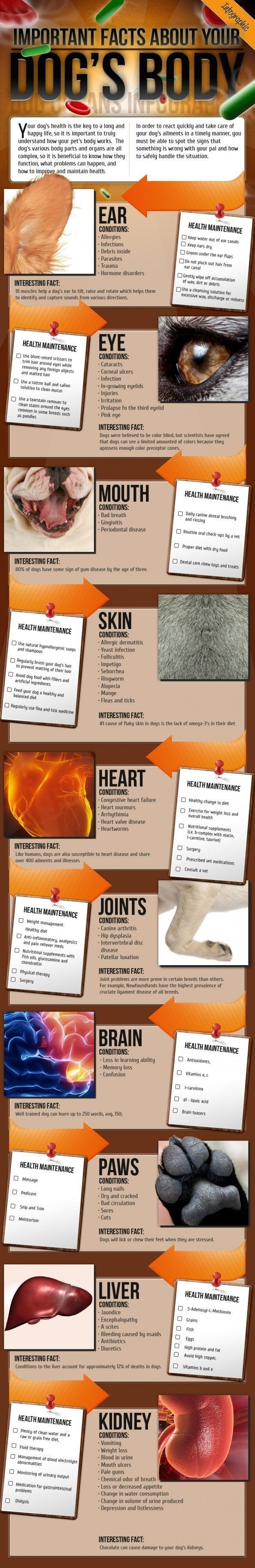 Important Facts about your Dog's Body Infographic: I love a great infographic for nonfiction literacy skills. This text is challenging but could be great for citing text evidence. by LiveLoveLaughMyLife