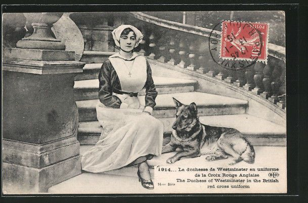 AK La durchesse de Westminster en uniforme de la Croix Rouge Anglaise, Schäferh