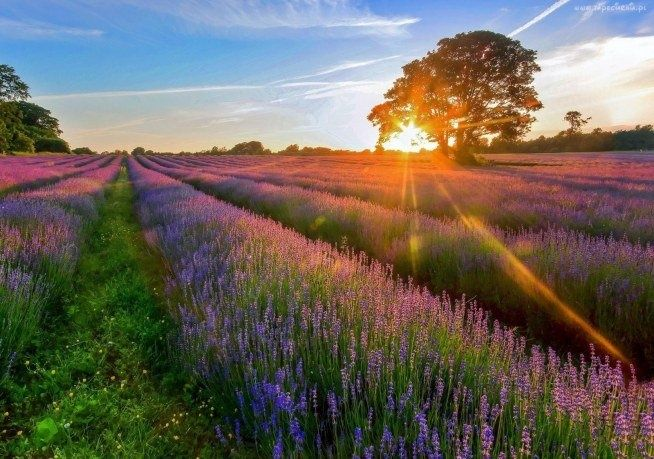 NN5 #summer #travel #field #heather