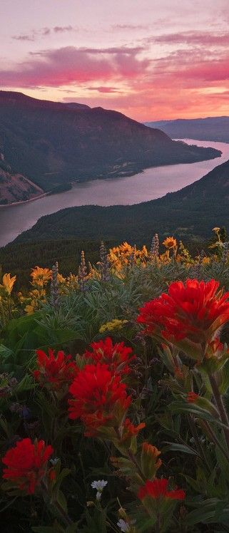 The Columbia River Gorge from Dog Mountain in Washington (Oregon across river)
