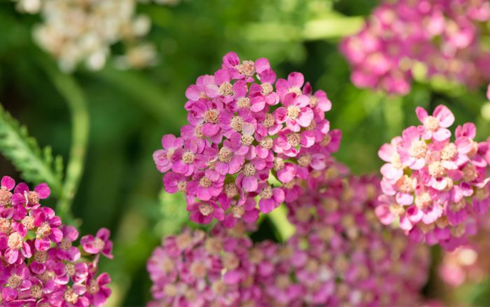 My top 3 plants to give your garden great seasonal colour in July – Gardening ideas