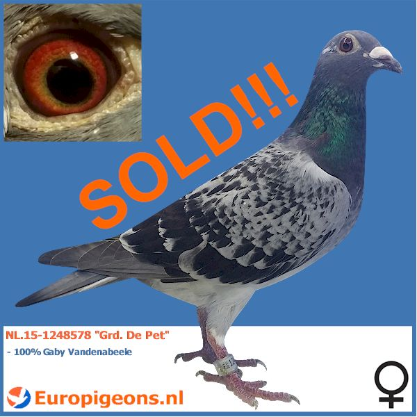 SOLD TO THE UNITED KINGDOM!!! Jonathan good luck with this bird!
