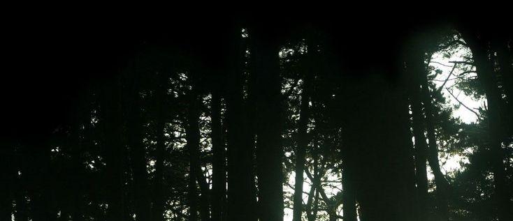 forêt hantée par esprits maléfiques