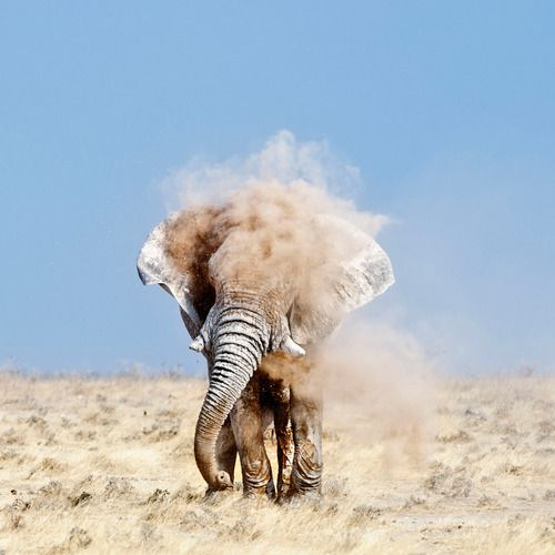 National Geographic Photo Contest 2012 - The Big Picture - Elephant