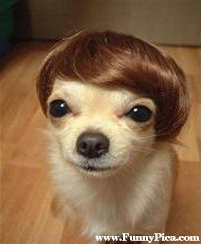 Mejores 44 imágenes de PerritosKW en Pinterest | Animales lindos ...