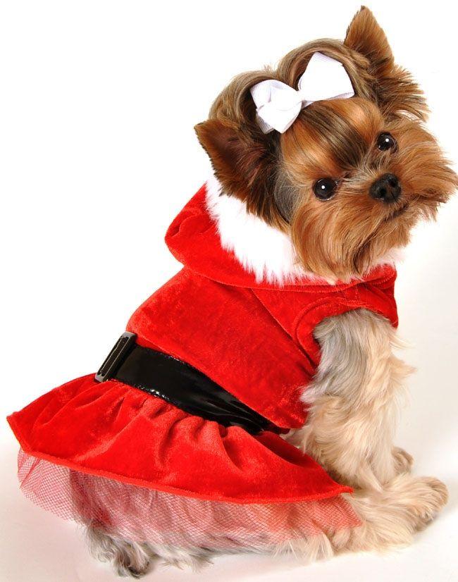 Pin by sophia sahr on Dog Fashion | Pinterest | Dogs, Puppies and Dog  dresses - Pin By Sophia Sahr On Dog Fashion Pinterest Dogs, Puppies And