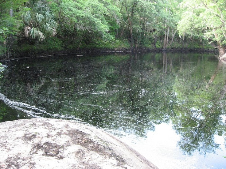 Diving & Digging for Fossils - Aucilla River, Florida. Many well preserved fossils found here.