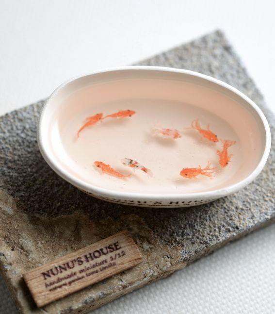 「金魚で癒されたい!」nunu's house - by tomo tanaka -