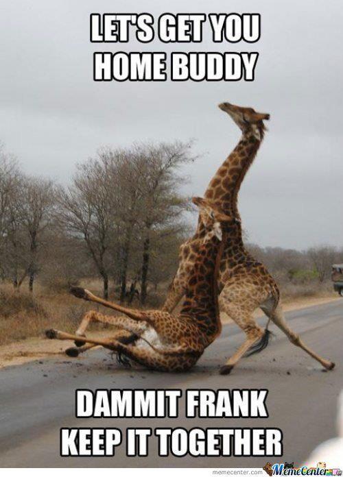 Go home giraffe, you are drunk.