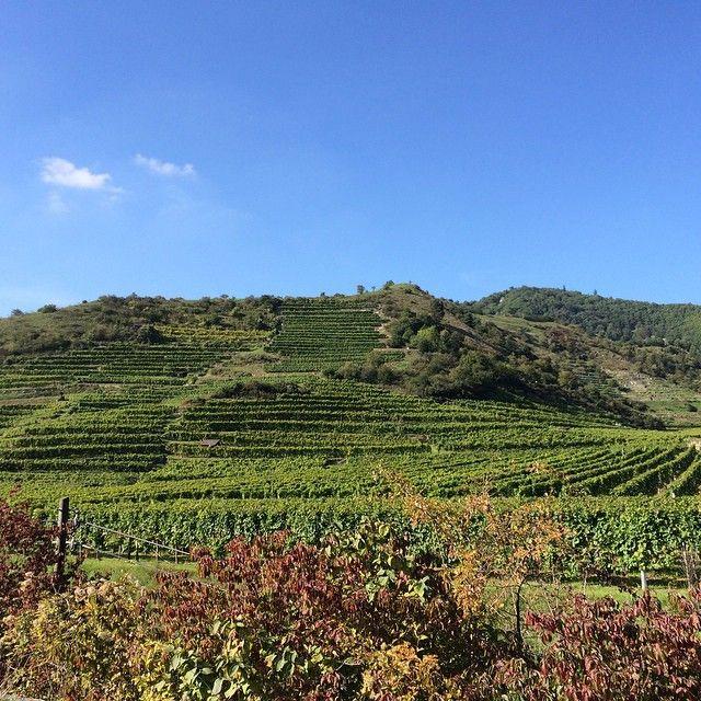 Weingut Knoll Duernstein vineyard #circovino #austrianwine #wachau