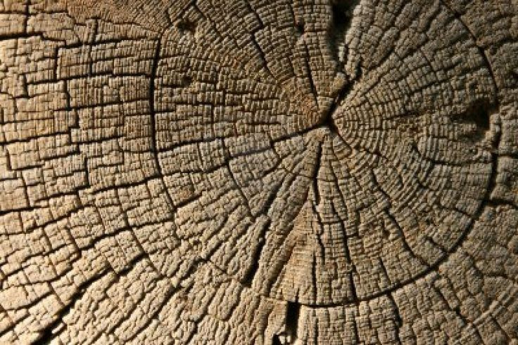 Image result for art element texture photography
