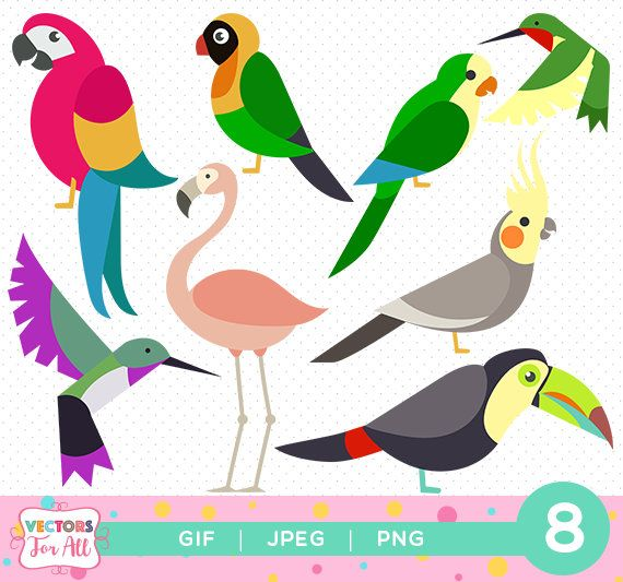 17 Best ideas about Bird Clipart on Pinterest | Art clipart, Clip ...