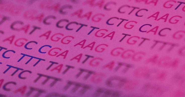 Como calcular as taxas de mutação. A taxa de mutação é a chance de omissão ou mudança de um nucleotídeo no DNA causada ou por erros naturais no processamento do DNA (mutação espontânea) ou por agentes externos (mutação induzida). Esta taxa não deve ser confundida com a frequência de mutação, que é o número de incidências de mutação em uma dada geração. A taxa de mutação para uma ...