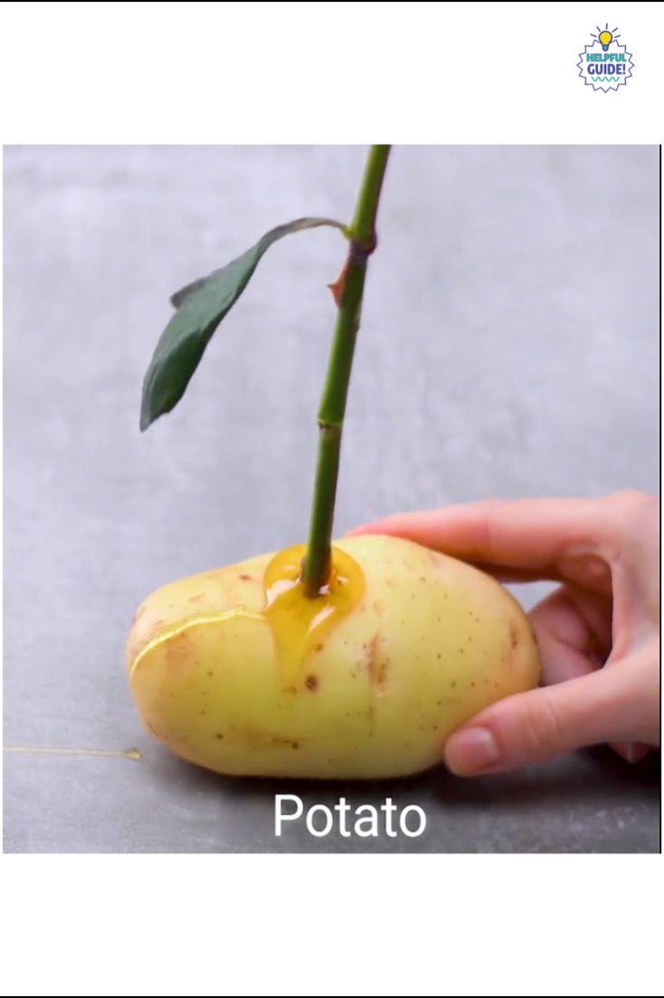 Best fertilizer for tomato plants