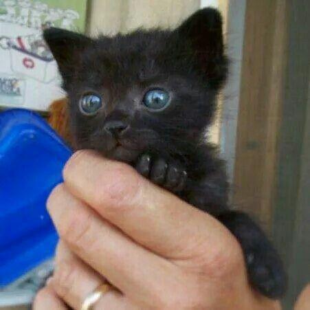 Love Black Cats!