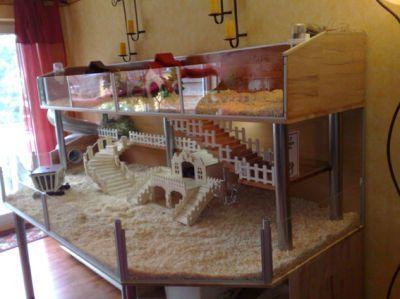 die besten 25 hasenk fig selber bauen ideen auf pinterest kaninchengehege selber bauen. Black Bedroom Furniture Sets. Home Design Ideas