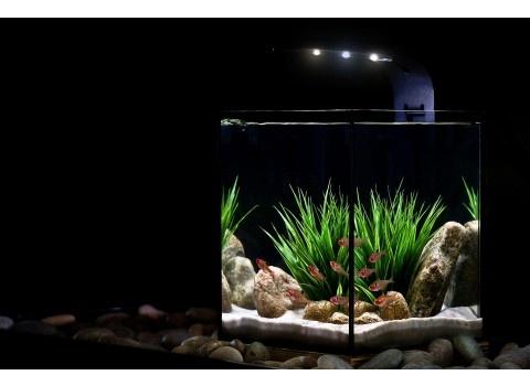 60 Best Ecoxotic Ecopico Aquarium Images On Pinterest