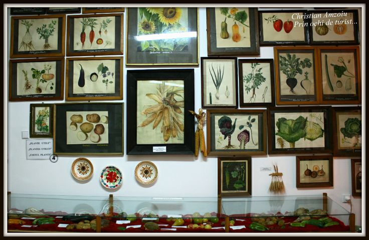 Botanical museum of Bucharest...  https://prinochideturist.wordpress.com/2014/04/24/muzeul-botanic-bucuresti-the-botanical-museum-of-bucharest/