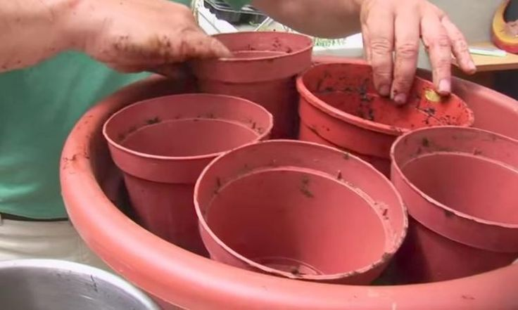 Il dépose five petits pots dans un très gros pots à fleurs! Un professional du jardinage nous révèle une astuce qui fait toute l. a. différence!
